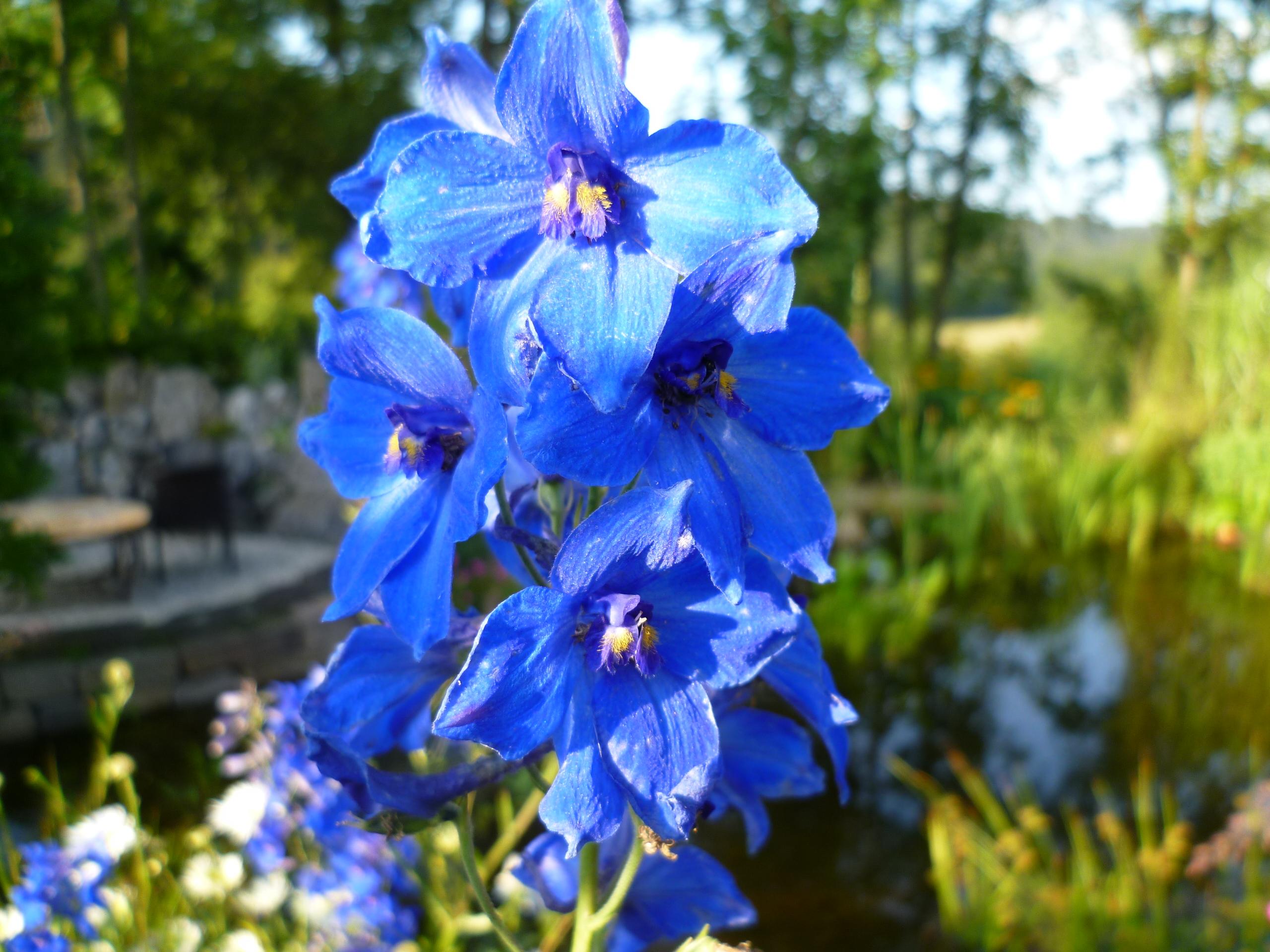 Staudengarten - Garten- und Landschaftbau aus Ennepetal